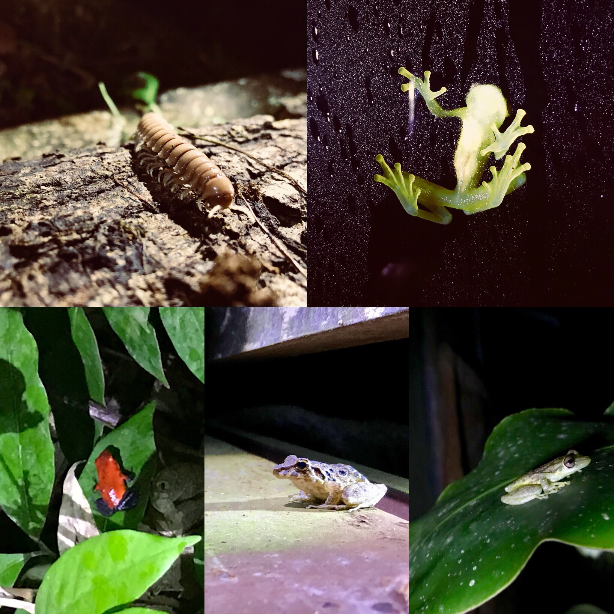 All of the nature during the night walk at Arenal Natura Eco Park